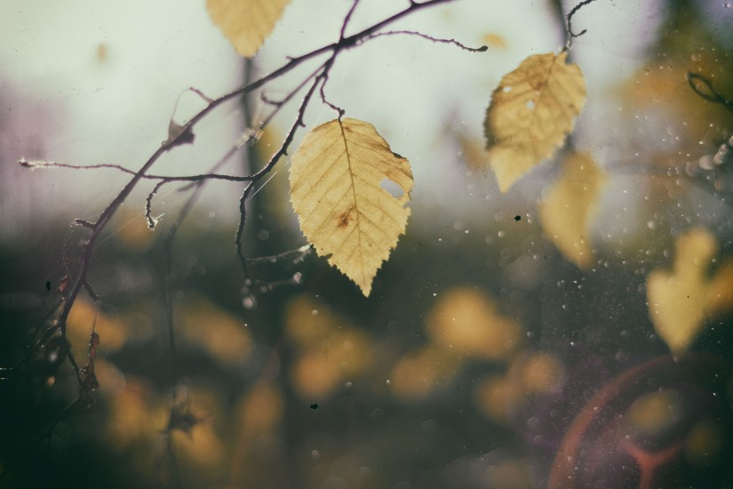 autumn-branches-fall-5036-825x550